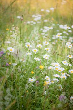 Can I somehow make my backyard into a field of wild flowers?