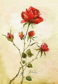 обычная роза (Виктория Кирдий)