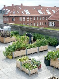 I like how the raised beds appear to be on pallets. This would help for moving garden around. #urbangarden #howtourbangarden
