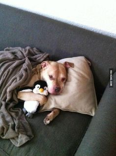 A dog who is taking a sick day to spend more time with his penguin.