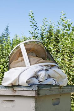 Beekeeping for Beginners: Common-Sense Guide to Bee Safety -  It's common bee safety knowledge that bees are defensive by nature, so don't set...