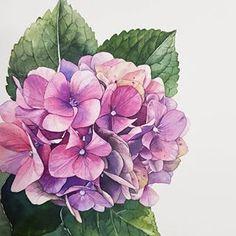 #수국 수업문의:010.7120.4344/문자나 DM으로 주세요 . 사진출처:@jane.florist Watercolor Paintings For Beginners, Watercolor Projects, Watercolour Painting, Watercolor Flowers, Botanical Drawings, Botanical Illustration, Botanical Prints, Watercolor Illustration, Floral Artwork