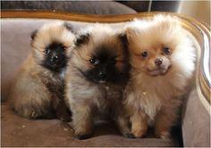 criadero perros y gatos santa marta venta de cachorros santa marta ...