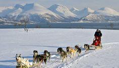 Dog sledding in Tromsø, Norway