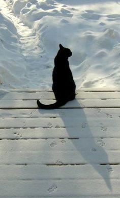 Black cat in the snow. Striking image.