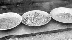 Gold panning with placer gold Fraser River, Gold River, Gold Rush, True North, History, Social Studies, Trays, Poem, Minerals