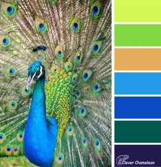 Peacock Parade: Colour & Inspiration Tuesday and Linky Party (Clever Chameleon Quilting) – unterhellt Haare Peacock Color Scheme, Color Schemes Colour Palettes, Green Color Schemes, Peacock Colors, Colour Pallette, Purple Colors, Plum Purple, Paint Colours, Color Balance