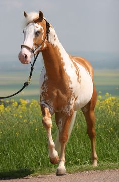 Meet more horse lovers,equestrian singles ,cowgirls or cowboys at the site www.horsesingles.net