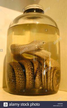 Image result for snake formaldeide