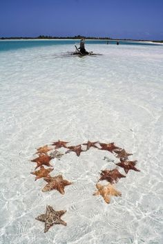 Star Fish! we so could have done this on vacation!!! They were every where!!! NEXT TIME!