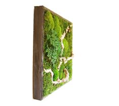 Re-connect with the beauty of nature - bring the great outdoors into the heart of your home or office! Preserved to permanently capture the look of thriving, verdant, living plants, Artisan Moss® Green Wall Plant Paintings® enrich and enliven any indoor space. It's a simple alternative to