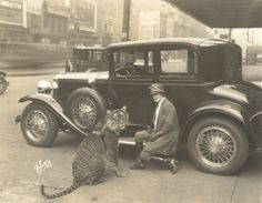 Mabel Stark sits on the running board of an automobile while holding her tiger Rajah the Second on a leash outside of the Chicago Colosseum. Circus World Museum
