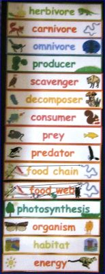 #Science Food Chain and Food Web word wall $