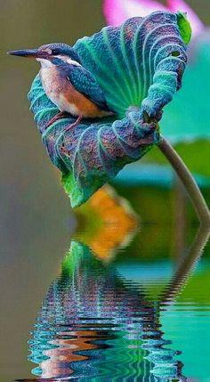 500 Best Beautiful Birds Images In 2020 Beautiful Birds Birds Pet Birds