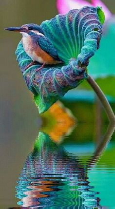I'm in awe of the way the colors and textures of the bird and the plant look as if they were designed to go together.  #BuenosDiasATodos #FelizViernes