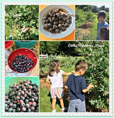 Blueberry picking tips & short list of blueberry-themed children's books.