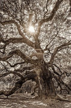 Unique Trees !!!!! (10 Stunning Pics) - Part 1 | #top10