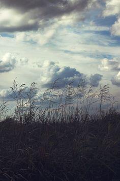 Sky & thicket  Free Stock Photo