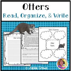 Here's a selection that can be used to teach main idea and details about OTTERS, an animal that lives in many parts of the world with the exception of Australia and Antarctica! #otters, #secondgrade, #thirdgrade, #fourthgrade, #Jackiecrews, #closereading, #animals, #expositorywriting, #graphicorganizers, #Englishlearners, #reading, #intermediateliteracy,