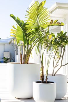 discount creative Ways Large Outdoor Planters Can Enrich Your Structures Entrance Different discount large outdoor planters only on this page Large Outdoor Planters, Outdoor Pots, White Planters, Outdoor Gardens, Outdoor Living, Potted Plants, Indoor Plants, Three Birds Renovations, Tropical Garden