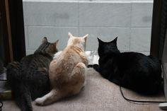 里親さんブログ梅雨明け気分 - http://iyaiya.jp/cat/archives/80365