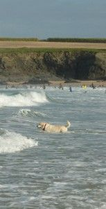 Dog friendly Padstow - Harlyn Bay Cornwall cottages