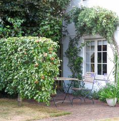Fences for privacy - ideas for privacy fences, backyard privacy fences, fences for small garden privacy plus how to use trellis for screening in your garden Garden Privacy, Sloped Garden, Backyard Privacy, Privacy Fences, Back Gardens, Small Gardens, Outdoor Gardens, Espalier Fruit Trees, Townhouse Garden
