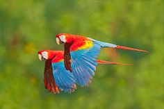 Image result for birds of the jungle