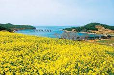 관련 이미지 Fields, Golf Courses, Flowers, South Korea, Royal Icing Flowers, Flower, Florals, Floral, Blossoms