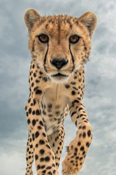 Close encounters (2) by Marc MOL on 500px