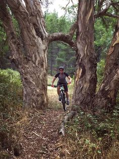 Exploring Sparrow Hill MTB Trails http://tyresandsoles.com/2017/03/07/taking-flight-at-sparrow-hill/ Have you experienced the trails at Sparrow Hill? If nto then you should! #corc #mtb #sparrowhillmtb #mtbcanberra