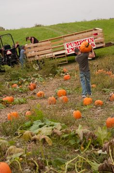 Schuyler Farms pumpkin patch. Harvest Gay Spirit Camp is November 1-3, 2013! http://eastonmountain.org/harvest-gay-spirit-camp/