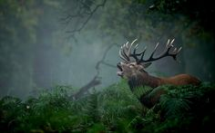Photograph Forest roars by Félix Morlán González on 500px