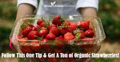 Do you ever wonder why your strawberry plants won't produced strawberries? Well I have a solution for you! Follow this one tip and get a ton of organic strawberries out of your garden!