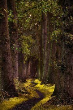 Kronkelpaadje [Winding path] by Lars van de Goor
