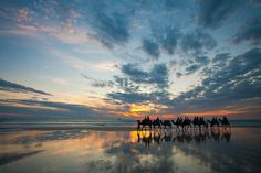 Ride a Camel on Cable Beach, Western Australia - Bucket List Dream from TripBucket