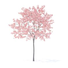 Buy Peach Tree with Flowers Model by CGAxis on Peach Tree model. Height: Compatible with max 2010 or higher, Cinema and many more. Architecture Graphics, Architecture Drawings, Landscape Architecture, Landscape Design, Tree Photoshop, Photoshop Images, Photoshop Elements, Peach Trees, Peach Flowers
