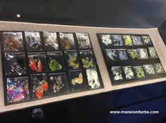 Diferentes tipos de plumas con los que se elaboran las obras en Arte Plumario, parte de la Exposición: Las Plumas y el Viento en el Museo de Artes e Industrias Populares de Pátzcuaro.