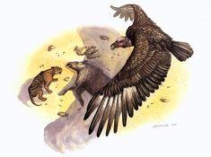 Argentavis magnificens kleptoparasitism by Phillip M. Jurassic Park, Jurassic World, Animals And Pets, Cute Animals, Extinct Animals, Prehistoric Creatures, South America, Mammals, Illustration Art