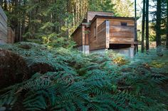 rainforest-retreat-residential-architecture-wood-agathom-co-vancouver-island-british-columbia-canada-architizer-a-awards-2016_dezeen_1704_col_3
