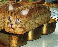 cat bread