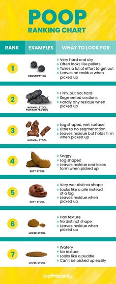 How To Stop Dog Diarrhea: 4 Natural Ways To Soothe Your Dog's Stomach - Poop Ranking Chart - Dog Has Diarrhea, Dog Coughing, Stop Diarrhea, Dog Constipation Remedies, Constipated Dog, Foods Dogs Can Eat, Dog Enrichment, Dog Health Tips, Natural Cough Remedies