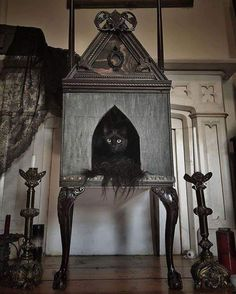 Cabriol legs, classical molding and a gothic arch door - a split personality - how purrfect for a cat