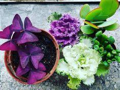 #collection #succulent #succulentlove #succulents_only #gardening #littlegarden #flowers #succulentaddiction