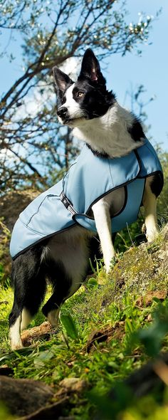 The Hurrta Dog Cooling Coat is designed to make your pet more comfortable in hot, sunny weather. Simply rinse the entire coat in cold water, wring it out, and then place it on your pet for immediate cooling relief from the grueling summer heat.