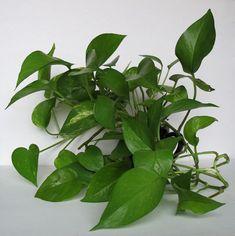 Planting Flowers, Plant Leaves, Planters, Plant, Window Boxes, Pot Holders, Flower Planters, Pots