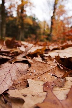 Image about autumn in Fall🍁🌰🌅 by Alice on We Heart It Autumn Aesthetic, Brown Aesthetic, Fall Pictures, Fall Photos, Autumn Day, Autumn Leaves, October Country, Fall Background, Autumn Coffee