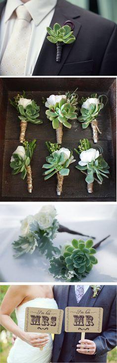 I'm obsessed w succulents...