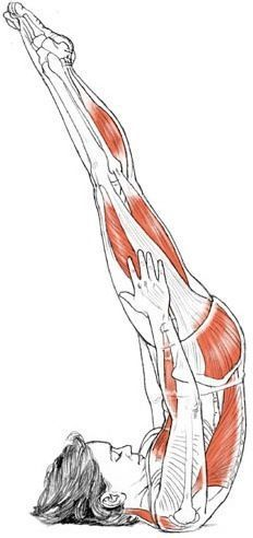 Shoulder Stand Pose (Niralamba Sarvangasana) Deconstructed #Yoga #Anatomy | Loved and pinned by www.downdogboutique.com