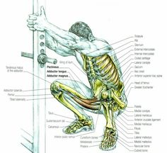 EXERCISE ANATOMY: Stretch for Squats. Benefits – help increase flexibility to the leg, help increase circulation throughout the legs, help increase your leg strength and balance, prepares your leg muscles for leg exercises, reduces residual soreness. Yoga Anatomy, Human Anatomy, Fitness Tips, Fitness Motivation, Health Fitness, Exercise Motivation, Sport Studio, Coach Sportif, Squat Workout